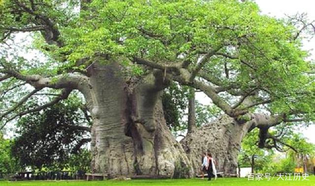 最奇特的树_最奇特的树是什么