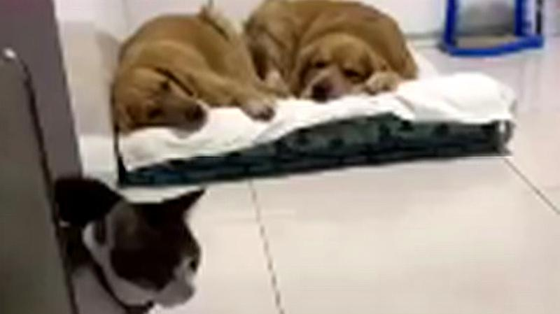 给猫咪买什么别墅都没用,到头来还不如买两只狗