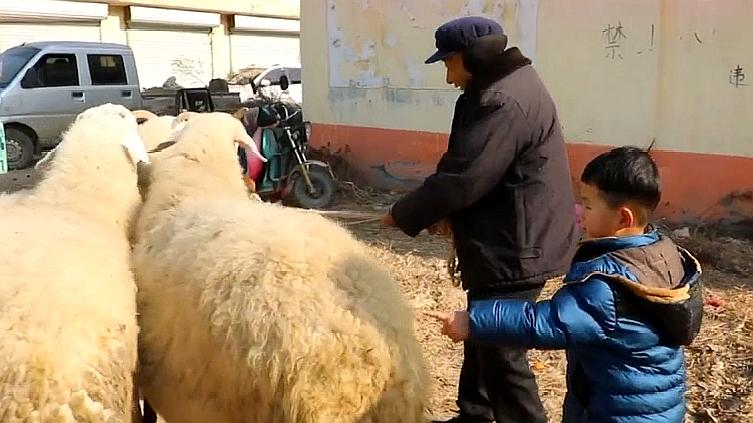 农村萌娃买山羊,这样砍价真幽默,卖羊的老人无言以对!