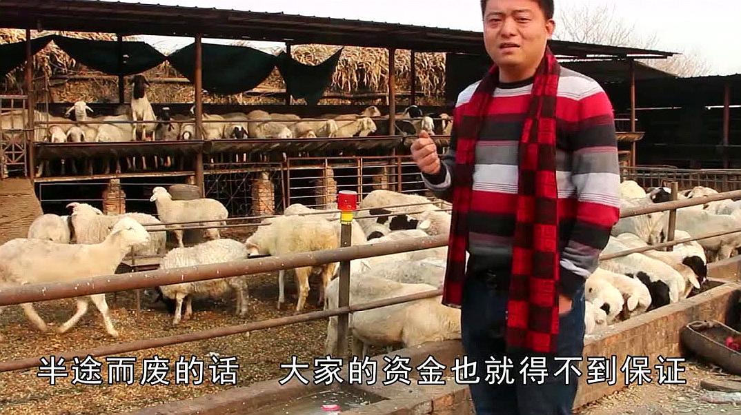 新手该如何养羊?这四点实用妙招要记住,少走很多不必要的弯路