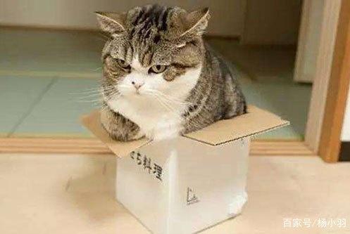 猫咪凭空消失17个小时,最终因它一泡尿让它与主人团聚