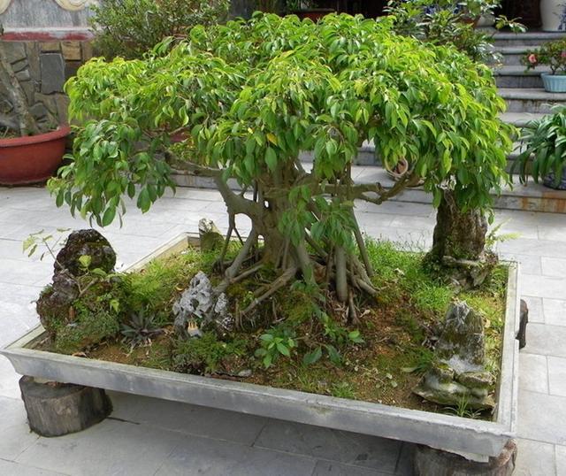 家里万万要放上这三种植物,净化空气除甲醛,对家人身体越来越好