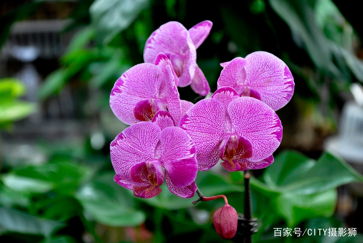 芳村花卉市场,人照踩花照看,广州人看花无惧人潮