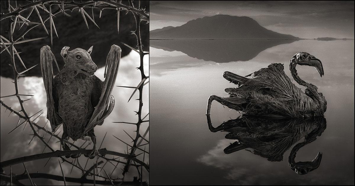 纳特龙湖_1. 纳特龙湖——坦桑尼亚北部