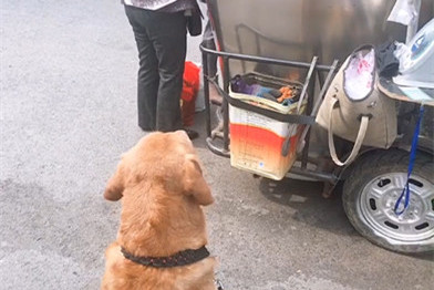 金毛目视烤薯阿姨,狗:阿姨,看在我这么可爱的份上……阿姨:滚