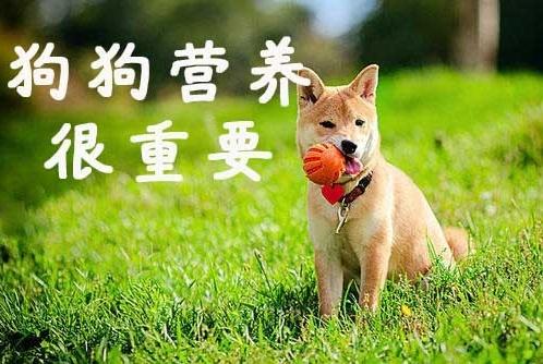 新手铲屎官养犬干货,这样喂养才能让狗狗健康又漂亮!