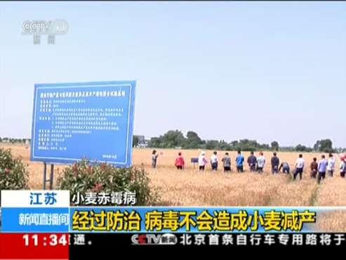 江苏:小麦赤霉病——经过防治  病毒不会造成小麦减产
