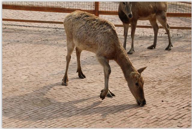 濮阳周边研学旅行记在濮阳东北庄野生动物园收获快乐