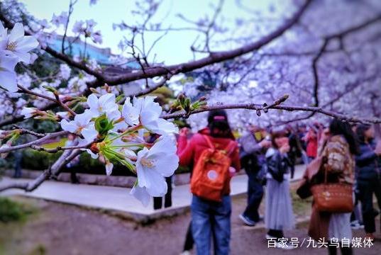 武大赏樱引冲突,游客先挑衅女保安!樱花代表的爱国情怀值得尊重