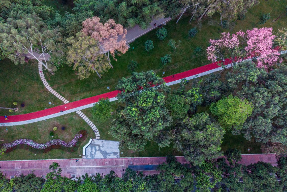 上头条了,天河公园种花树、修跑道,美得惊动了一座城