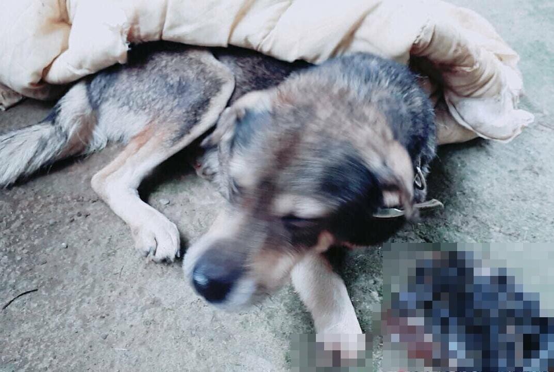 狗狗离奇失踪,一个月后它再出现时让宠主心疼落泪