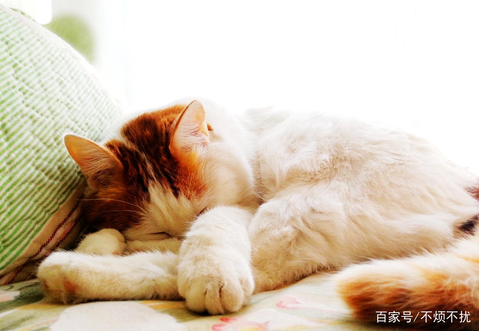 猫这种动物是水做的,睡个觉也能花样百出,真可爱