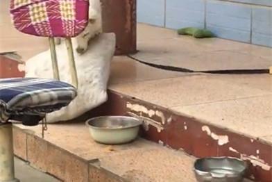 傻狗扔垫子撒气,狗:我还是捡回来吧,不然晚上睡觉怪冷……