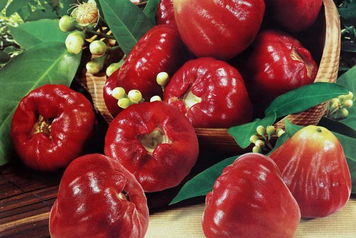 """正在""""消失""""的5种野果,很多人都没见过,吃过3种就已暴露了年龄"""