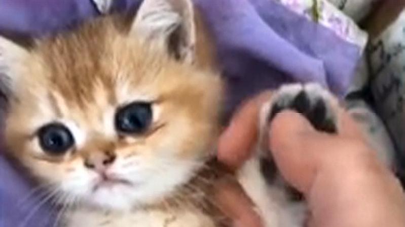 猫咪牌手机上线,滴滴滴歪?