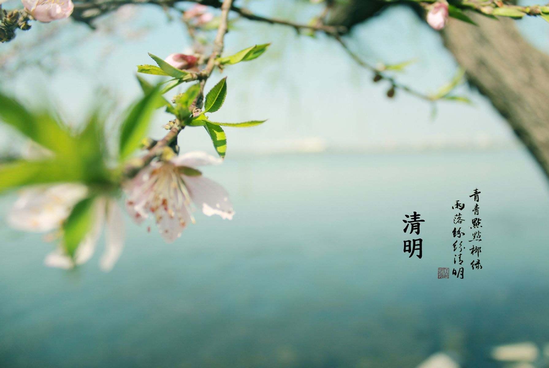 没有春天,远离故土,东南亚华人为何依然过清明节?答案很感人