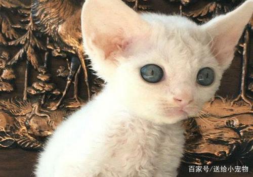 """好玩又漂亮的猫猫,""""喵喵""""叫真可爱,心都被暖化了"""