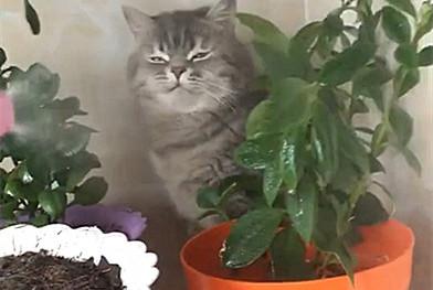 主人给草喷水,猫咪在旁也被喷湿,喵:我这么大个猫你看不见啊!