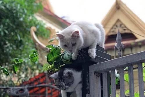 以为猫咪被卡门缝,走过去只能大笑一场,竟上了喵星人的当