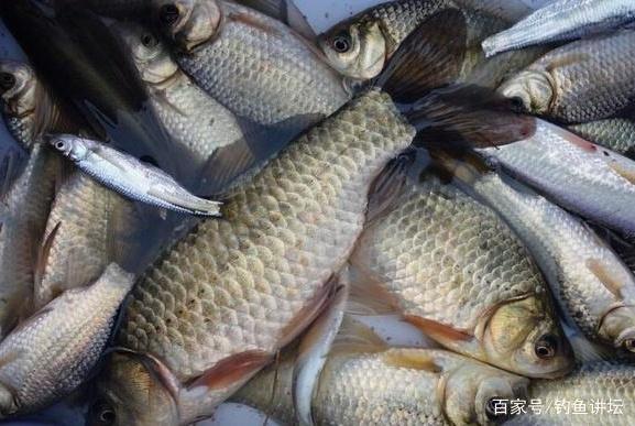春天钓鱼,如果能学会这六大妙招,不吹不黑,钓的就是比别人多!