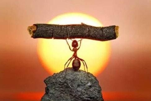 把蚂蚁放大一万倍,能主宰地球吗?生物法则:光大是不行的!