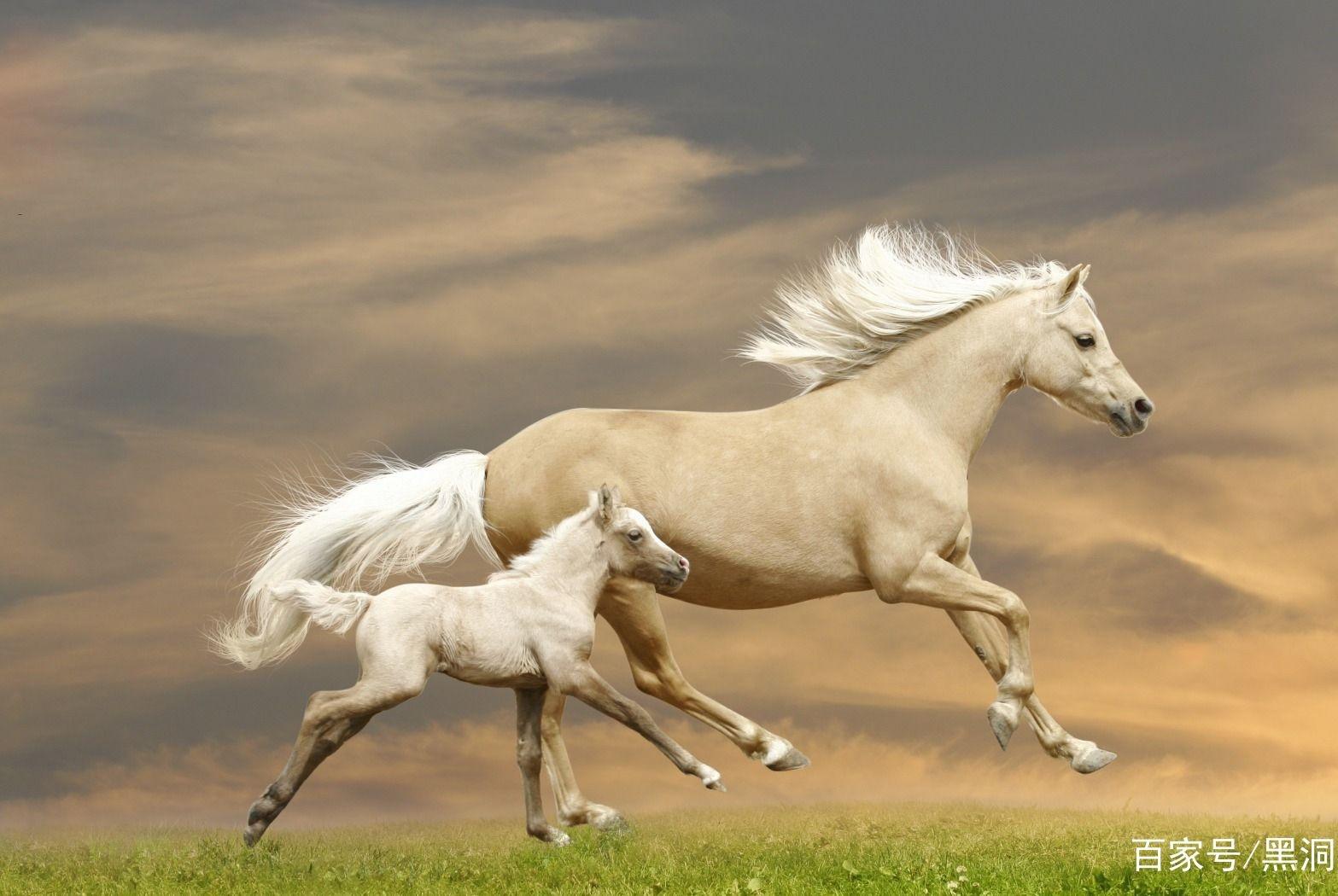 马的记忆力有多好?研究发现,它会记得上次见你时是微笑还是皱眉