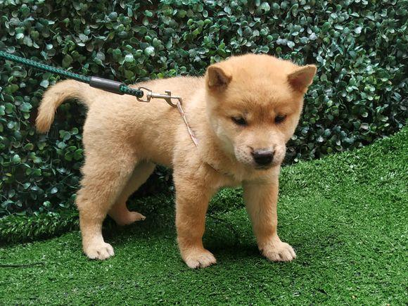 带小狗出去玩儿,它看到一个可以拍照的地方,自己就过去了