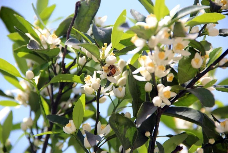 四月份果树管理的好坏,直接关系到全年的生产效益!