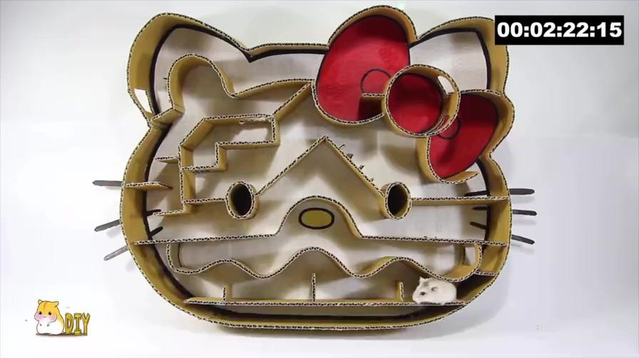 如何用纸板给家里的仓鼠制作猫咪迷宫,谁能最快挑战成功呢?