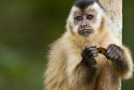 做实验教猴子用钱,它们竟学会了抢劫,还做了不可描述的交易