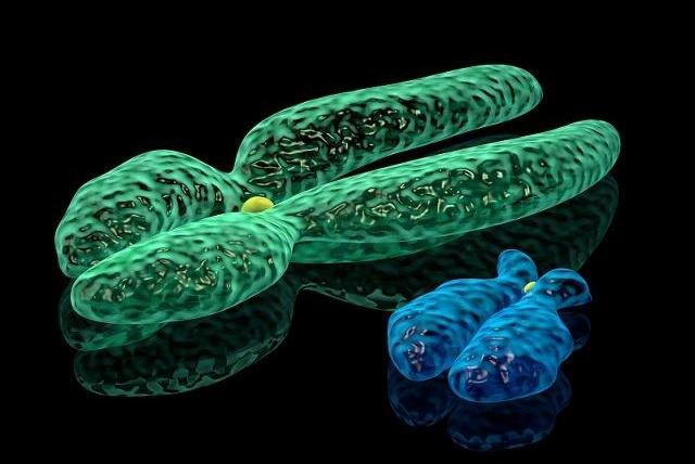 y染色体比x染色体小很多且仍在不断缺失,以后会不会完全失去?