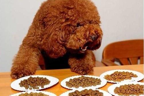 注意:这5种美食,对泰迪犬伤害很大!