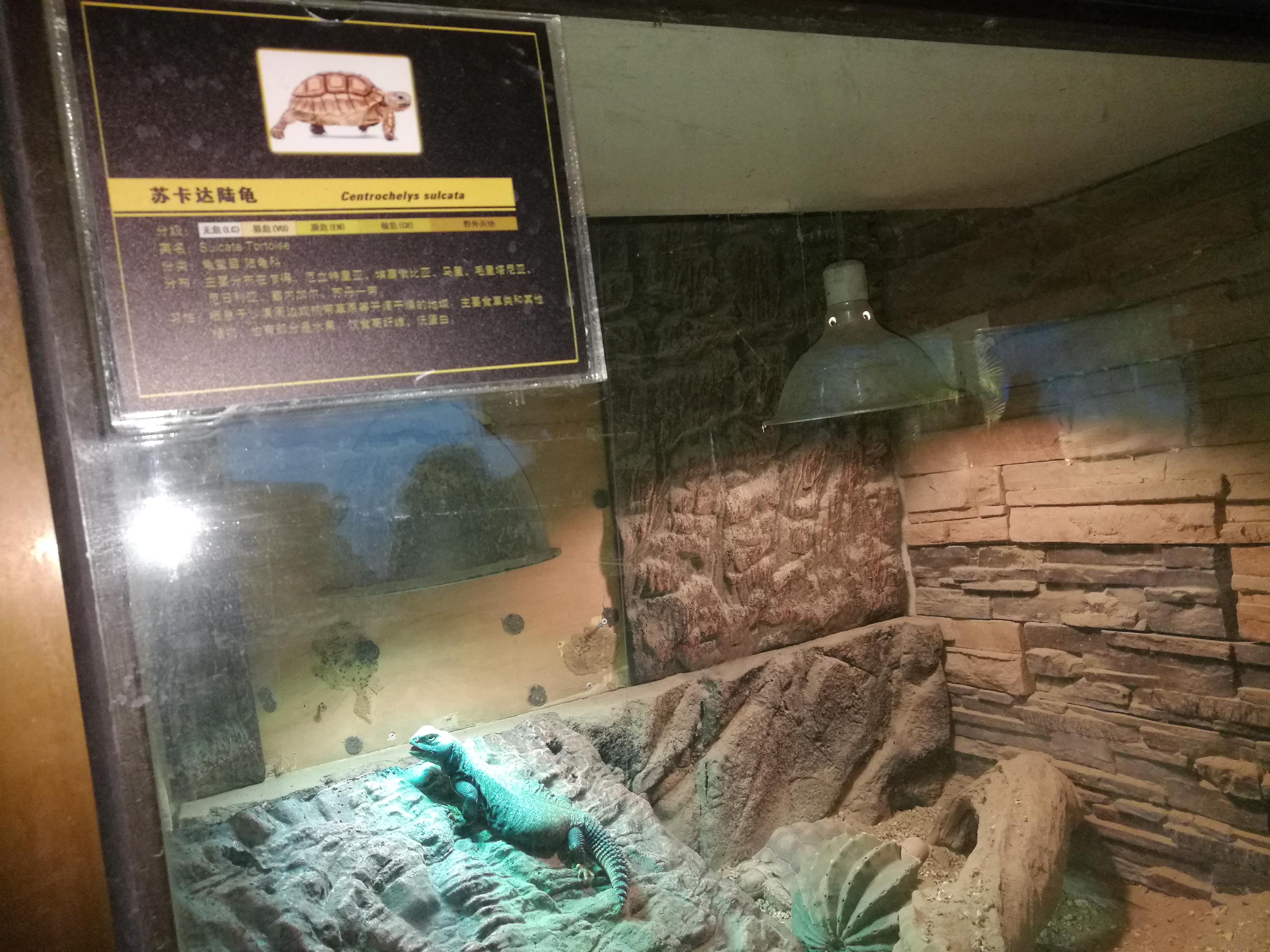 北京动物园的两栖爬行动物馆有误区:容易引起分类的