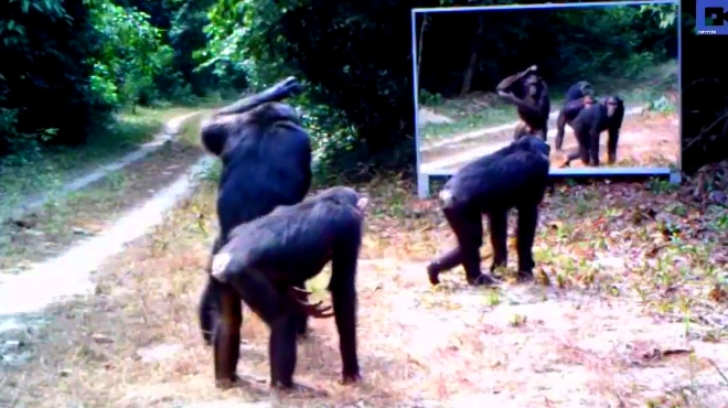 把镜子带到动物园,它们的反应让我笑出腹肌233333
