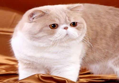 """养只""""小主""""猫猫,它可爱灵气又神秘,收养一只去"""