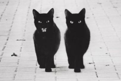 一直以为黑猫走的是高冷酷炫风,现在才发现它们拥有逗比的灵魂!