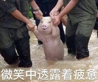 """她这算是在""""挂羊头卖狗肉""""吗?"""