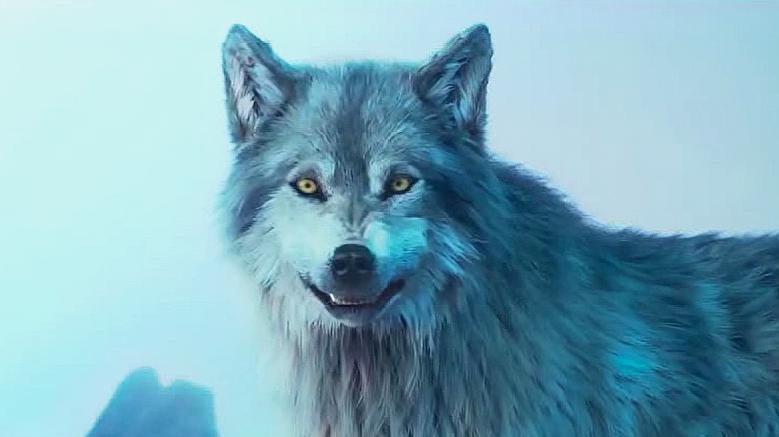 雪地里忽然来了一群狼,男子这样做,吓得狼都跑了