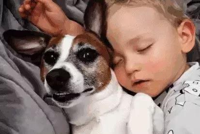 9岁男孩被狗舔后去世!谨记!狂犬病毒不是只有咬伤才感染!