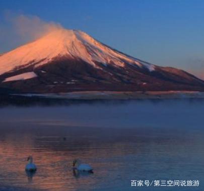 日本富士山,两只天鹅正在水中游动.