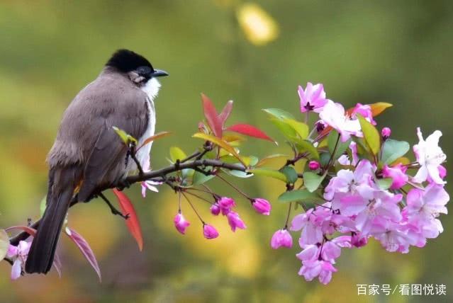 春天,在诗和远方的路上斑斓梦想