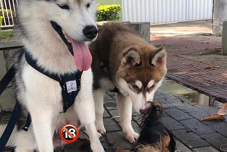 牵绳遛狗却险被车撞,30秒后主人决定带狗去绝育
