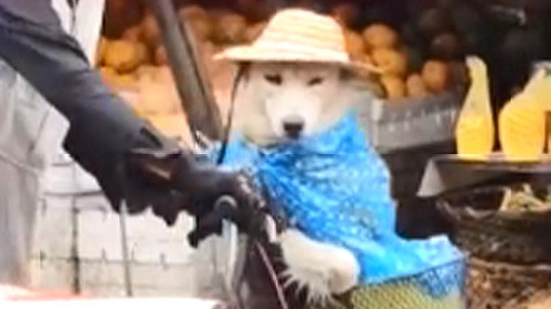 老爷爷带狗出门,结果下雨了,接下来的动作暖心了