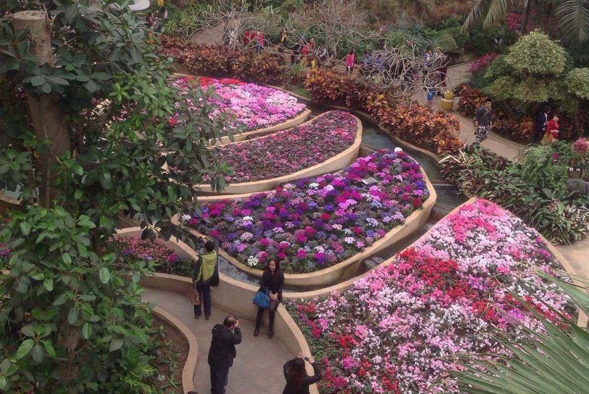 """能集中看到重庆十大名花之地,被称为""""山城花冠"""""""