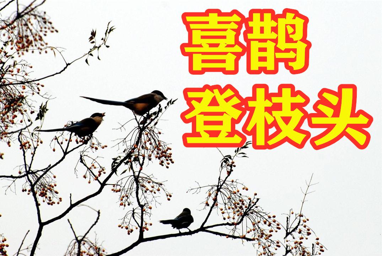 4月中旬喜鹊登枝头,事业飞黄腾达,财运高涨,爱情美满的4大星座