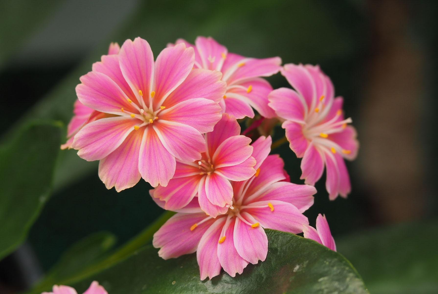 四月初春花得意,陌上花开,不染秋凉,岁月静好,愿与君语的星座