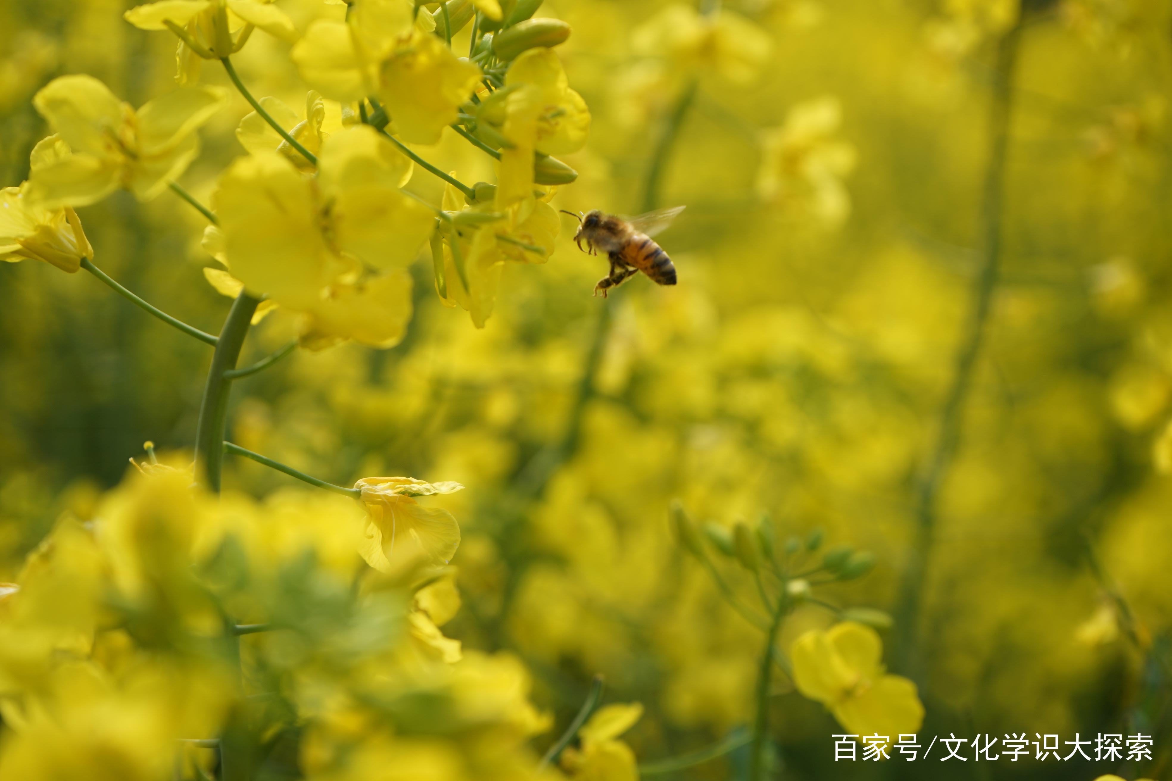 """农村俗语:""""春分有雨到清明,清明下雨无路行"""",说出农民"""