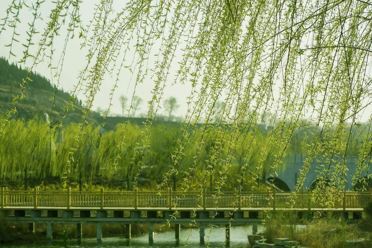 九首描写杨柳的诗词,春风拂面,画面唯美,化作春天里的图片