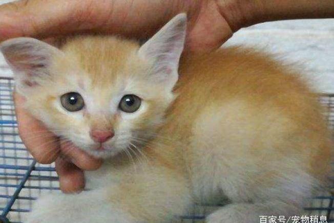 猫咪为什么会舔你?原因有5个,你都知道吗?