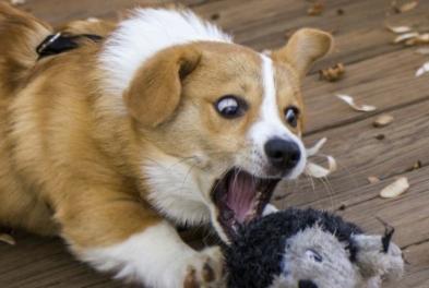 开车带狗出去玩和带猫出去玩的区别?铲屎官:不,这不是我的狗